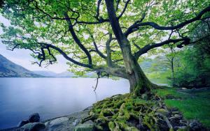 tree_river